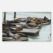 seals at fishermans wharf Decal