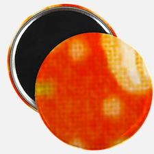 Orange Daisies Magnets