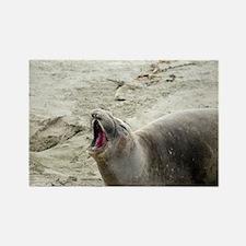 barking seal Rectangle Magnet