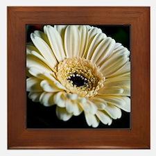 Gerbera Flower Framed Tile