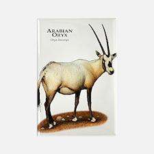 Arabian Oryx Rectangle Magnet