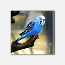 "Blue Budgie Square Sticker 3"" x 3"""