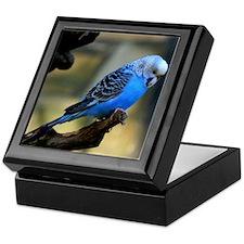 Blue Budgie Keepsake Box