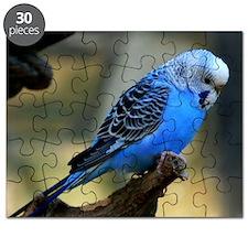 Blue Budgie Puzzle