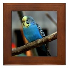 Budgie Flower Framed Tile