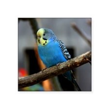 "Budgie Flower Square Sticker 3"" x 3"""
