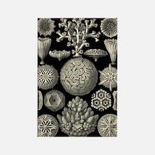 Haeckel's Hexacoralla Rectangle Magnet