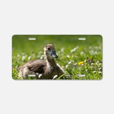 Egyptian Goose, young Aluminum License Plate