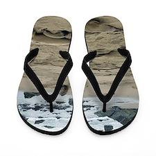 dozing seals on a beach Flip Flops