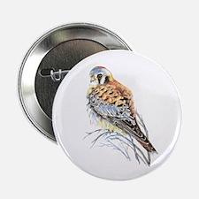 "Watercolor Kestrel Falcon Bird Art 2.25"" Butt"