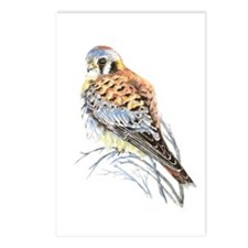 Watercolor Kestrel Falcon Postcards (package Of 8)