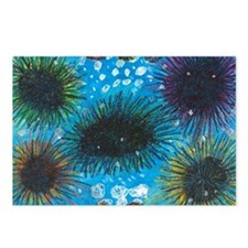 Sea Urchins Postcards (Package of 8)