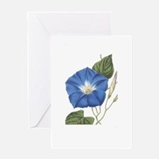 Morning Glory Greeting Cards