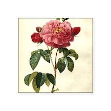 """Rosa Gallica Square Sticker 3"""" x 3"""""""