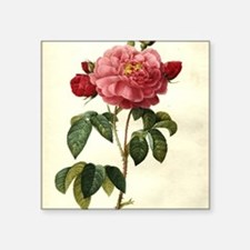 "Rosa Gallica Square Sticker 3"" x 3"""