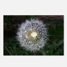 Dandelion Postcards (Package of 8)
