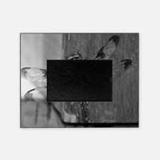 Dragonfly Black & White Picture Frame