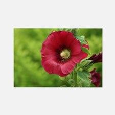 Red Kansas Holly Hock Rectangle Magnet