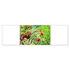 Rowan berries Bumper Bumper Sticker