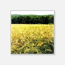 wheatfield Sticker