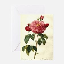Rosa Gallica Greeting Cards