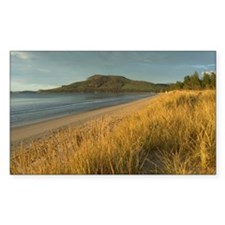 dune grass sunset Decal