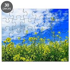 Canola Field Puzzle