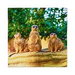 Meerkats standing guard Queen Duvet
