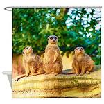 Meerkats standing guard Shower Curtain
