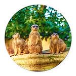 Meerkats standing guard Round Car Magnet