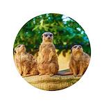 Meerkats standing guard 3.5