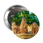 Meerkats standing guard 2.25