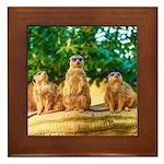 Meerkats standing guard Framed Tile