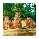 Meerkats standing guard Tile Coaster