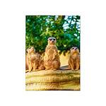 Meerkats standing guard 5'x7'Area Rug