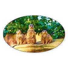 Meerkats standing guard Decal
