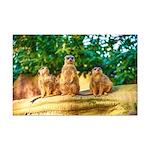 Meerkats standing guard Posters