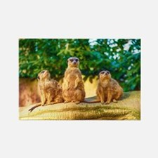Meerkats standing guard Magnets