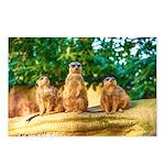 Meerkats standing guard Postcards (Package of 8)