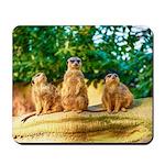Meerkats standing guard Mousepad