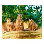 Meerkats standing guard King Duvet