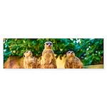 Meerkats standing guard Bumper Sticker