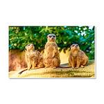 Meerkats standing guard Car Magnet 20 x 12