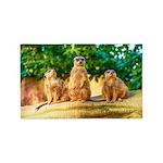 Meerkats standing guard 3'x5' Area Rug