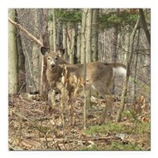 "Whitetail Deer Square Car Magnet 3"" x 3"""