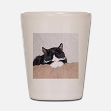Sweet Kitty Shot Glass
