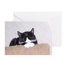 Sweet Kitty Greeting Card