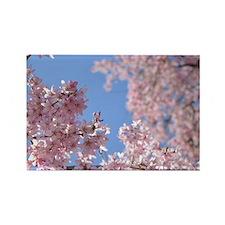 Cherry blossom Tree Rectangle Magnet