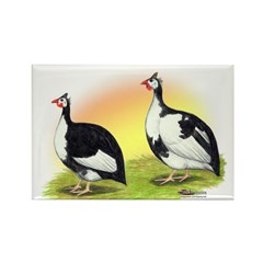 Pied Guineas2 Rectangle Magnet (100 pack)
