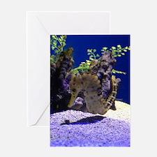 Seahorse Pair Greeting Cards